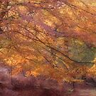 Fall Colours by Ann Garrett