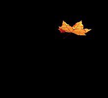 Floating Leaf by Ian Sanders