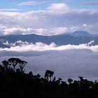 Cloud Forest Silhouette by Robin Loveridge