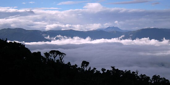 Cloud Forest Silhouette by Robin Loveridge