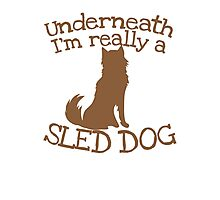Underneath I'm really a SLED DOG Photographic Print