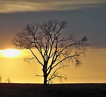 South Dakota Sunset Tree by kodakcameragirl