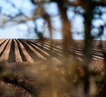 Furrows through the hedge by Billlee