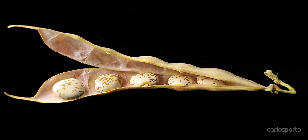Beans Seedpod by carlosporto