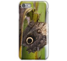 Forest Giant butterfly iPhone Case/Skin