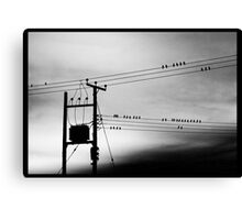 Birds on PowerLines Canvas Print