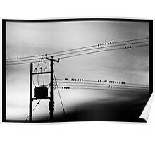 Birds on PowerLines Poster