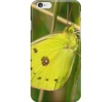 Giant Sulphur Butterfly iPhone Case/Skin