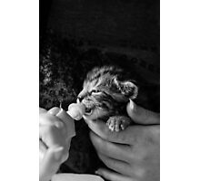 Hand Rearing Photographic Print