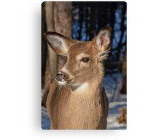 I'm too cute for words! Canvas Print