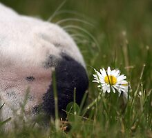 Wake up & smell the daisies! by LisaRoberts