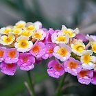 flower drops by Douglas Alan Photography