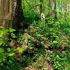 The Wooded Hillside_Shenk's Ferry Wildflower Preserve by Hope Ledebur