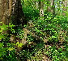 The Wooded Hillside_Shenk's Ferry Wildflower Preserve by Hope Ledebur