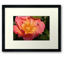 Bug on Flower 2 Framed Print