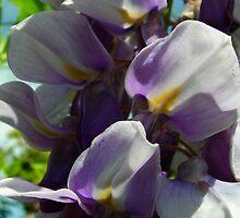 Flutter by tanithastlik