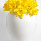 Daffodils in a White China Vase by Anthony Collins