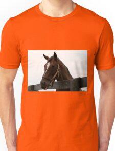 Sunshine Forever RIP - Old Friend's Equine  Unisex T-Shirt