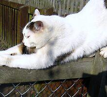 Bendy Cat by Ladymoose