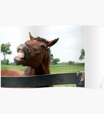 Special Ring - Old Friend's Equine Poster