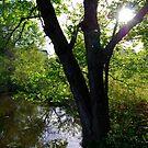 Relaxing Lake by Sunshinesmile83