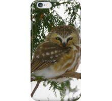 Northern Saw - Whet Owl - Ottawa, Ontario iPhone Case/Skin
