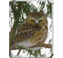 Northern Saw - Whet Owl - Ottawa, Ontario iPad Case/Skin