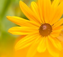 Yellow Petals of joy by Gary Lange