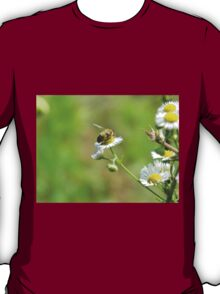 Bee on a white flower T-Shirt