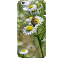 Bee on a white flower iPhone Case/Skin
