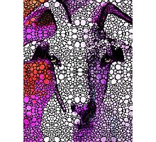 Goat - Pinky - Stone Rock'd Art By Sharon Cummings Photographic Print