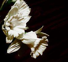 Albino Daffodills...... by trueblvr