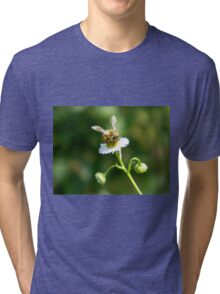 Bee on a white flower Tri-blend T-Shirt