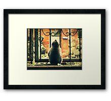 Little Monkey II Framed Print