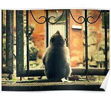 Little Monkey II Poster