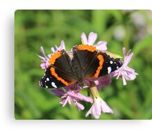 good red admiral Canvas Print