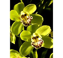 Green Orchids Photographic Print