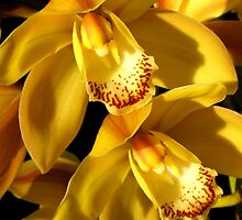 Yellow Orchids by Nupur Nag