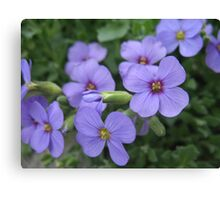 Violet Chatterboxes Canvas Print