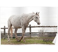 Xerox - NNEP Ottawa, Ontario Poster