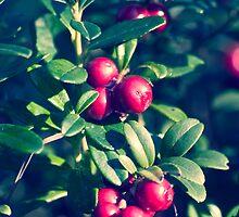 Puolukka (Vaccinium vitis-idaea) by Chrisseee