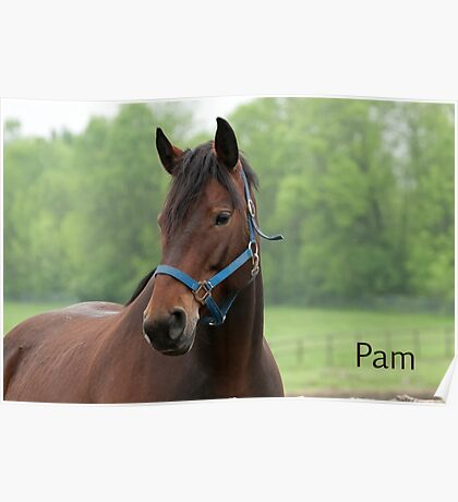 Pam - Nepean Equestrian Park Poster