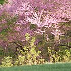 Sunset on Redbud by ckroeger