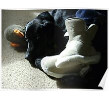 Domestic Bliss (dog at mistress' feet with toy)  Poster