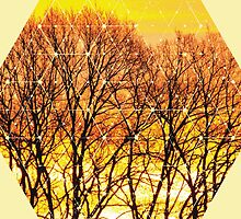 Nature and Geometry - Trees and Sunset by Denis Marsili - DDTK