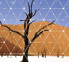 Nature and Geometry - The Landscape by Denis Marsili - DDTK