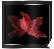 plantanus leaf Poster