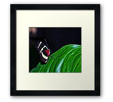 Beauty Flys Framed Print