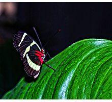 Beauty Flys Photographic Print