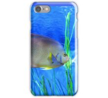 Into Blue - Tropical Fish by Sharon Cummings iPhone Case/Skin